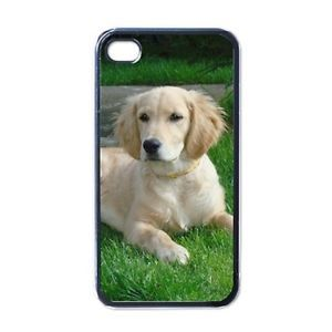 Golden Retriever Dog Puppy Puppies 1 Apple iPhone 4 Case Cover