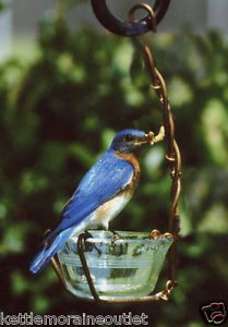 Holland Hill 1 Cup Copper Oriole Bluebird Jelly Jam Mealworm Hanging Bird Feeder