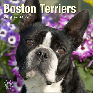 Boston Terriers 2014 Wall Calendar