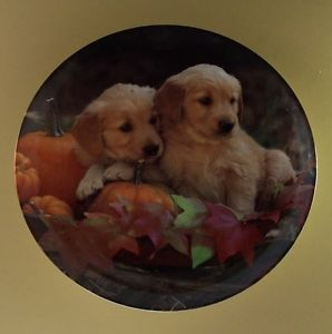 Two's Company Golden Harvest Yellow Lab Labrador Pumpkin Dog Puppy Plate 1 COA