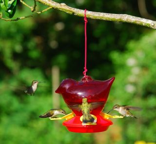 Birdfeeder Bird Shaped Hummingbird Bird Feeder 12oz