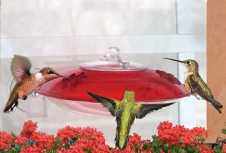 Bird Feeder Droll Yankees Window Hummingbird Feeder