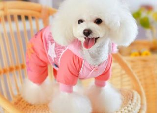 Five Star Autumn and Winter Dog Sweater Coat Four Feet Dog Clothes Wear Clothing