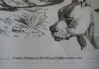 Antique Engraving Henry Alken's Scrap Book Greyhound Bull Terrier Dog Art C 1824